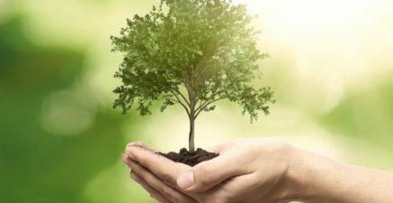 Conseil de défense écologique : les mesures pour l'environnement et la rénovation énergétique
